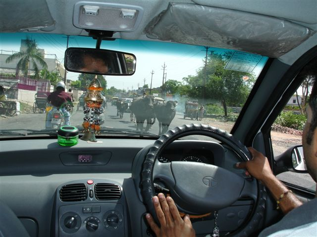 03 Water buffalo in traffic